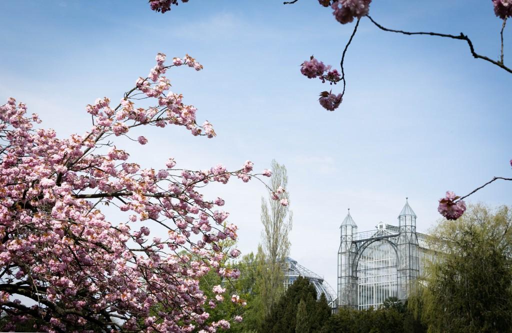 Botanical Gardens / Photo credit : Anna Cor