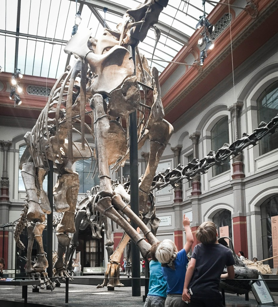Museum of Natural Sciences / Photo credit : Anna Cor